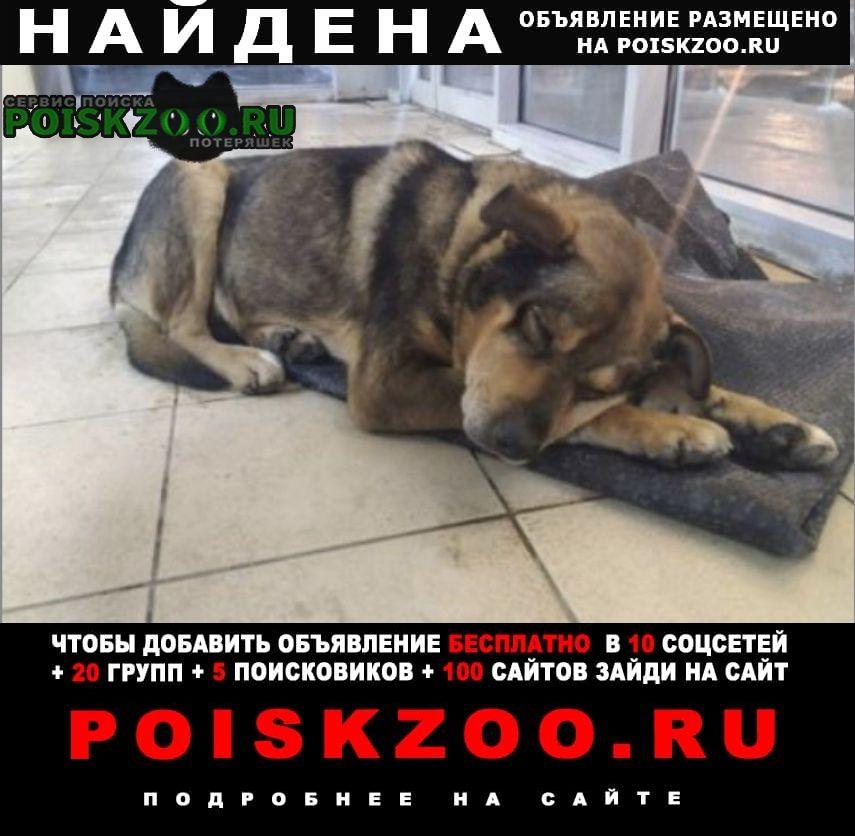 Найдена собака осталась без хозяйки Одинцово