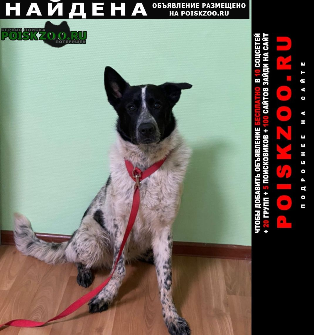 Найдена собака кобель пес г.Москва