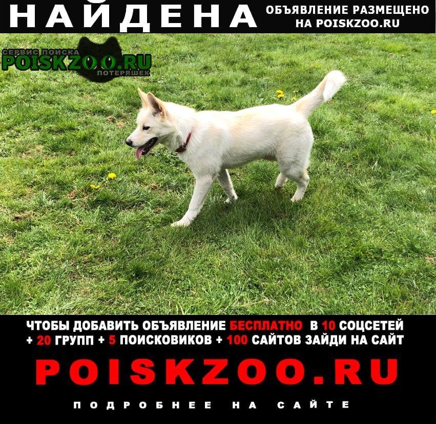 Найдена собака г.Руза