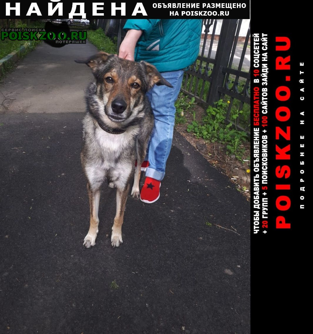 Найдена собака измайлово г.Москва