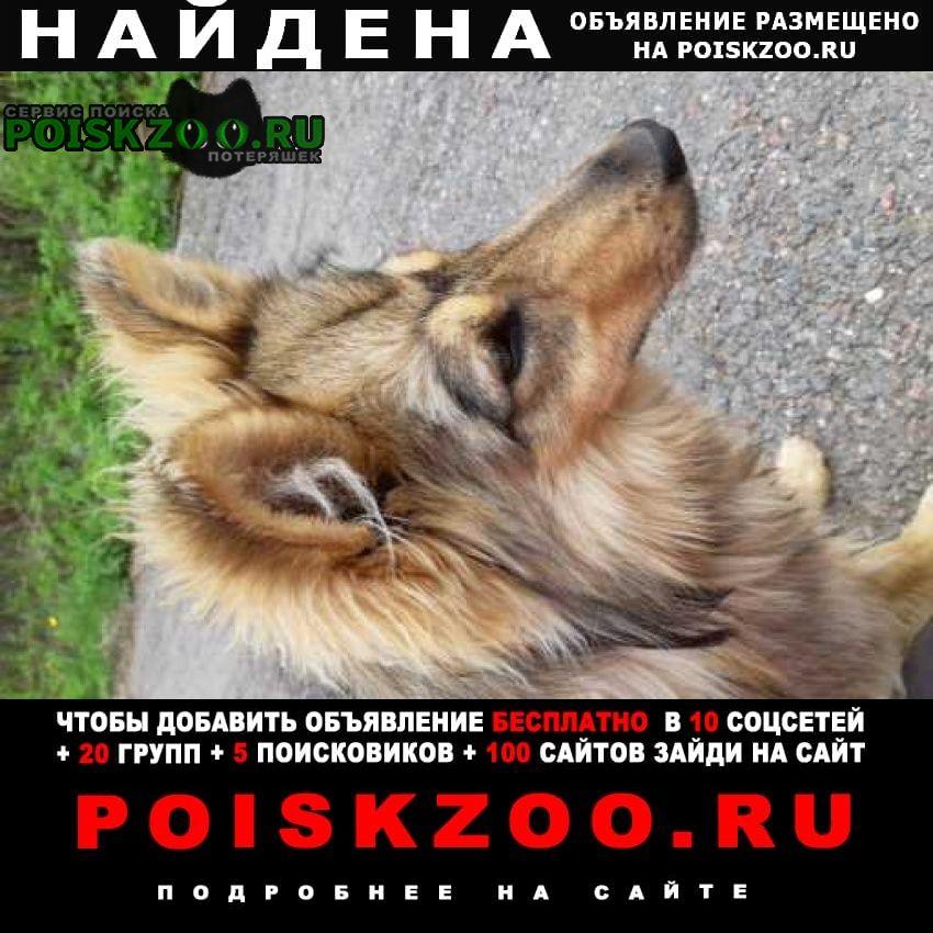 Найдена собака кобель щенок. примерно 4-6 месяцев. г.Чехов