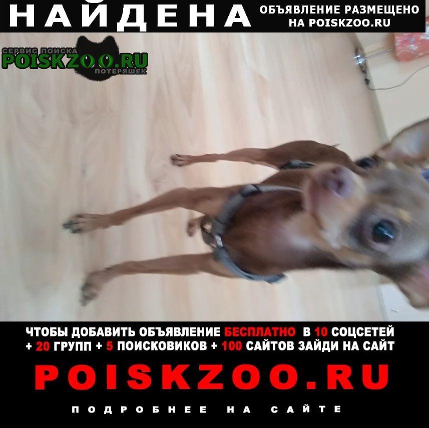 Найдена собака кобель на западном в районе 112 школы г.Ростов-на-Дону