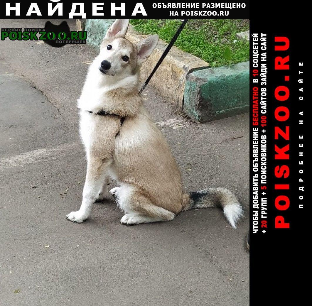 Найдена собака ищем ей дом г.Москва
