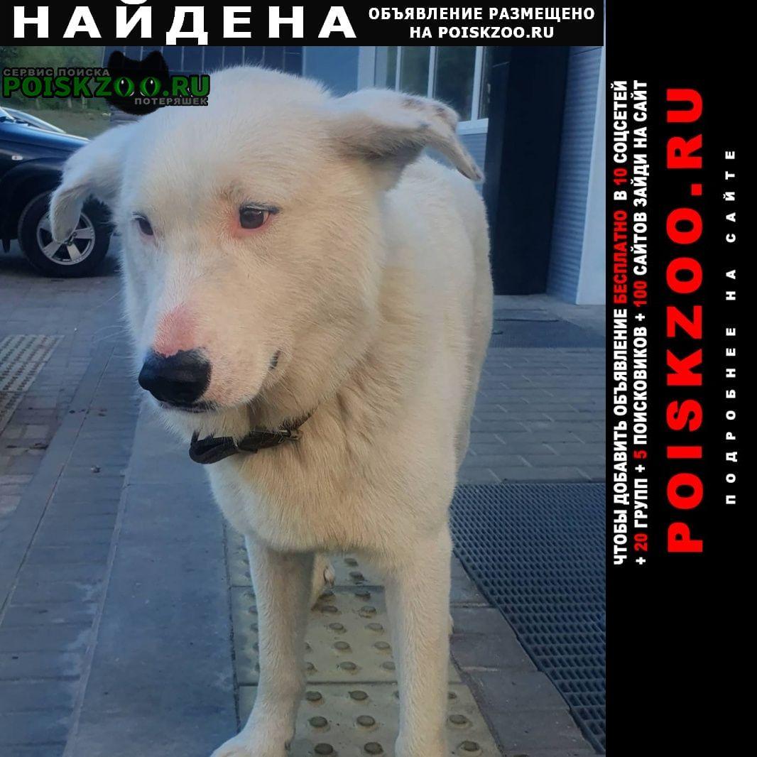 Найдена собака кобель ищем родного хозяина г.Гусь Железный