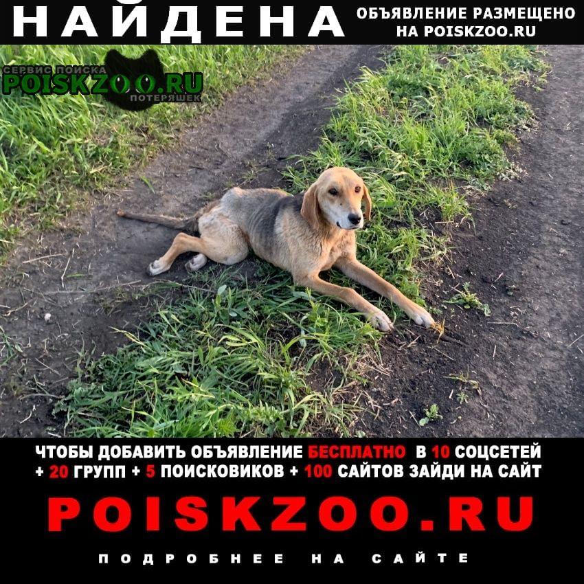 Найдена собака г.Губкин