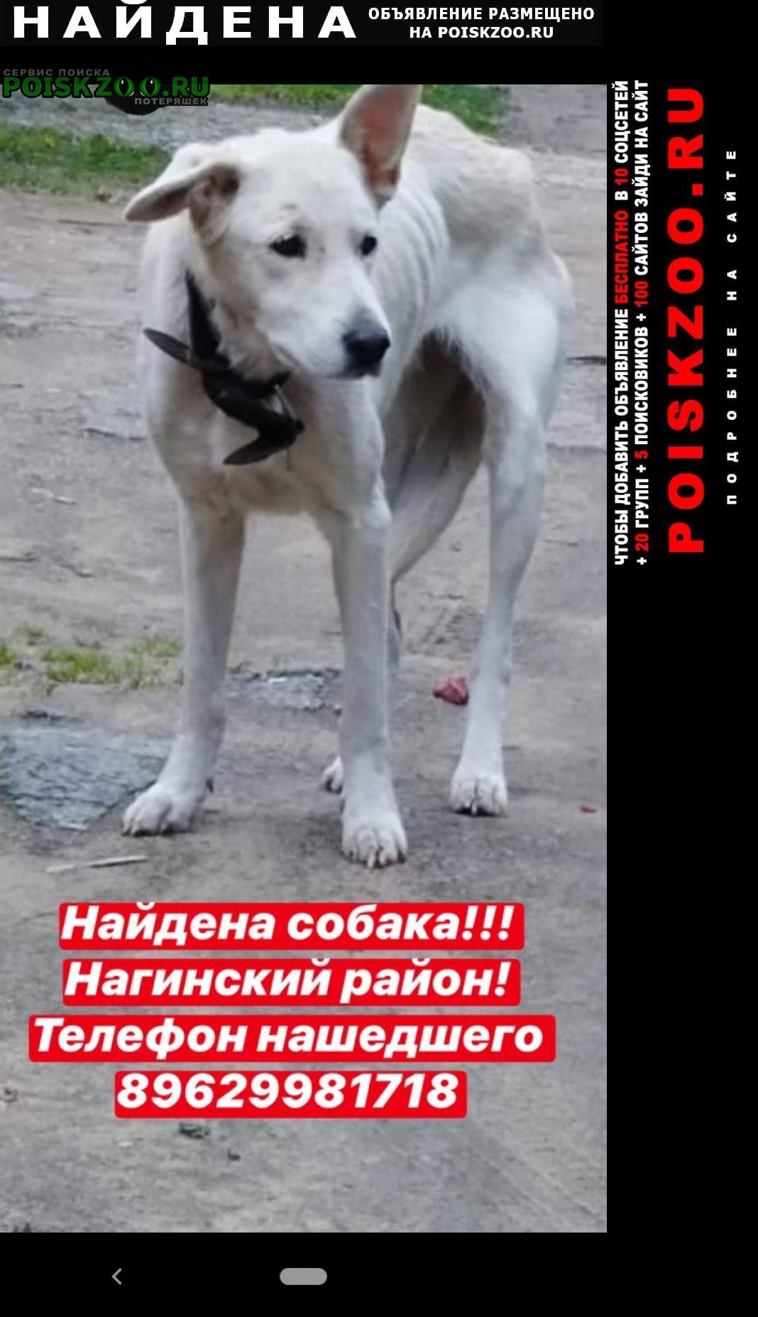 Найдена собака г.Ногинск