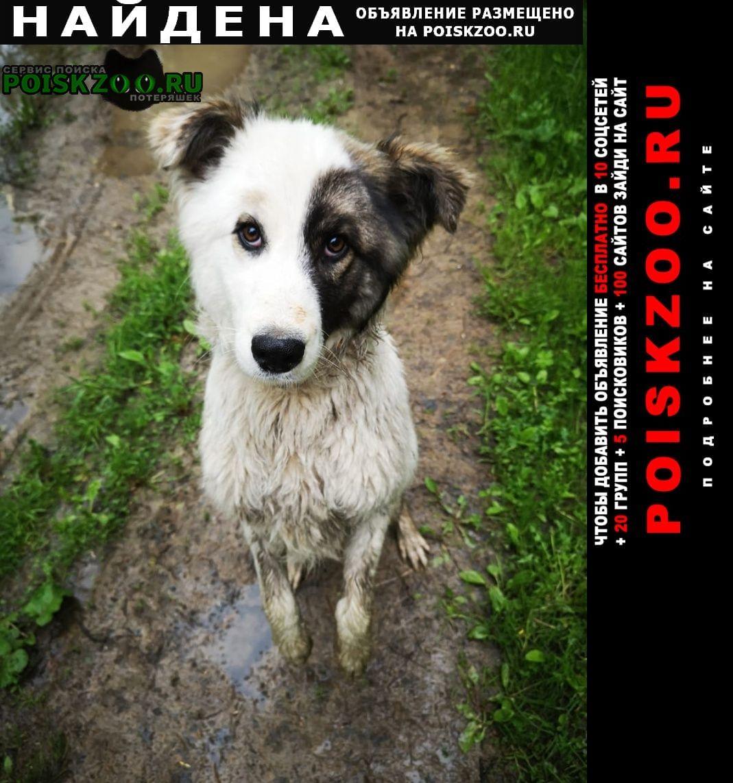 Найдена собака кобель ский район, снт иванцево г.Дмитров