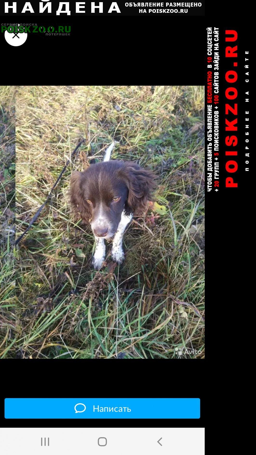 Найдена собака https://www.avito.ru/ohansk/sobaki/spani Оханск