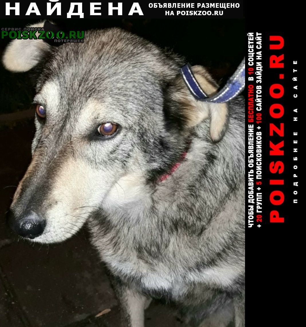 Найдена собака в снт дружба-1 пришл пёс Сергиев Посад