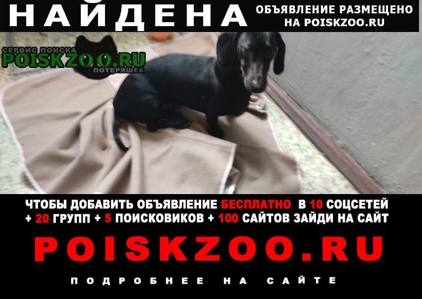 Найдена собака кобель такса, . без клейма Краснодар