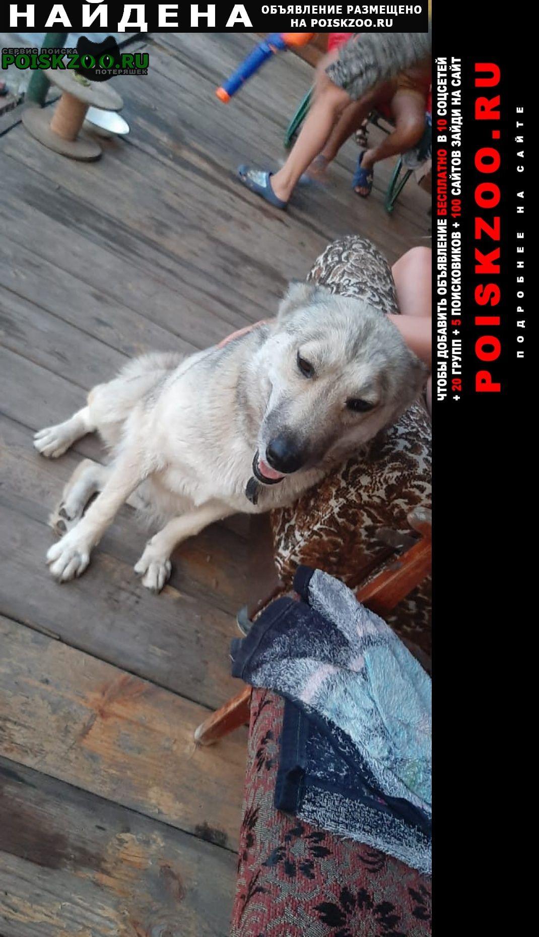 Найдена собака свяжитесь с нами ищем хозяина Тольятти