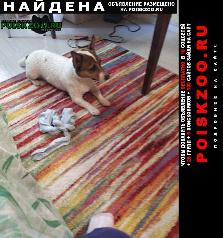 Найдена собака джек рассел Раменское