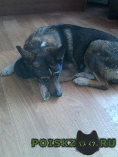 Найдена собака г.Мурманск