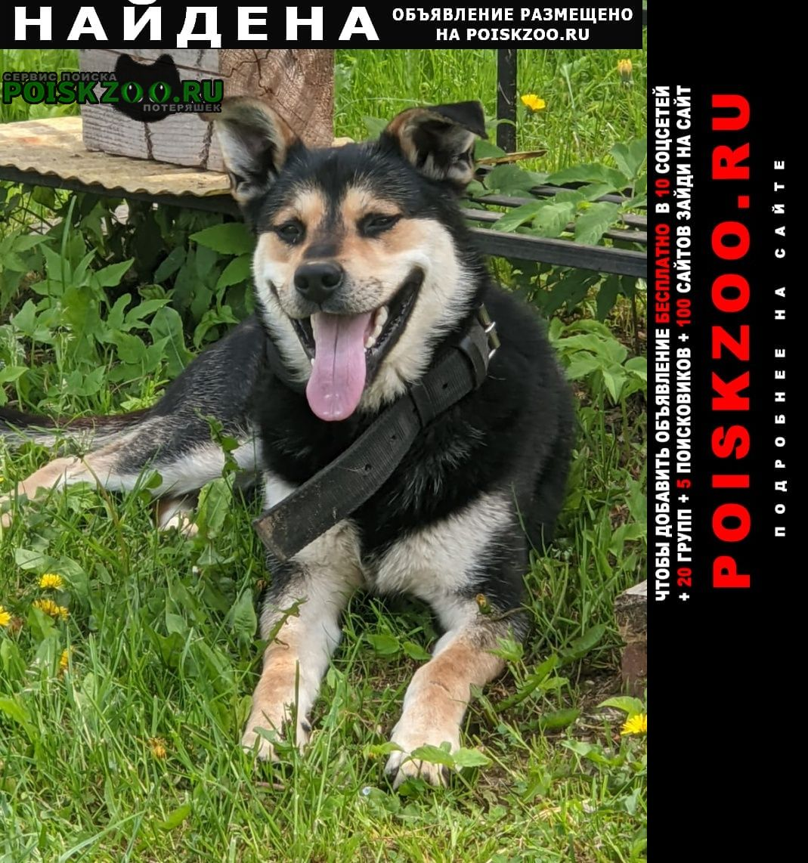 Найдена собака кобель Солнечногорск