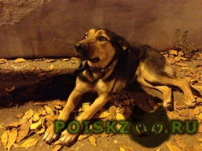 Найдена собака с ошейником. пугливая г.Казань