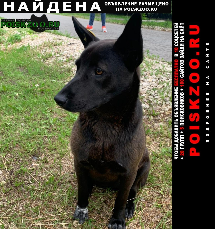 Найдена собака черкизово коломенский район Коломна