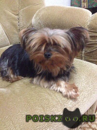 Найдена собака девочка г.Краснодар