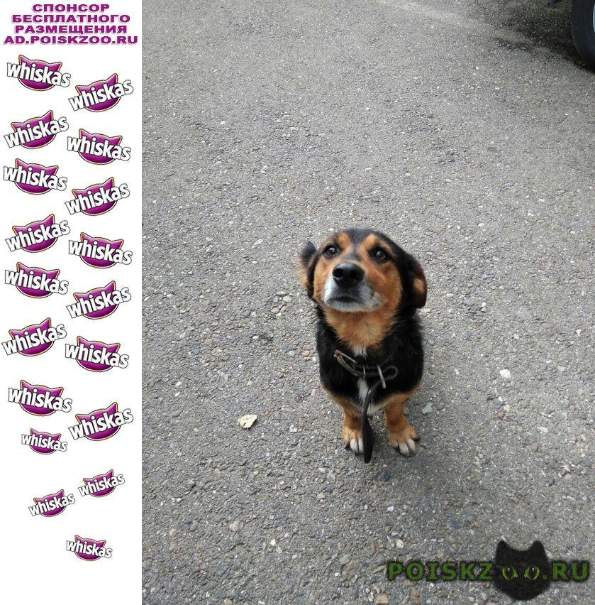 Найдена собака кобель кто потерял? г.Майкоп (Краснодарский край)