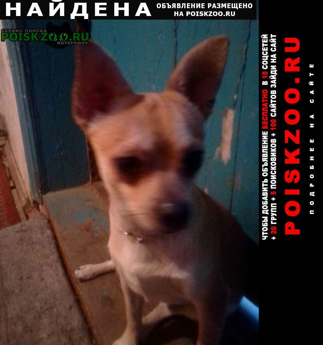 Ростов-на-Дону Найдена собака кобель помогите найти хозяина