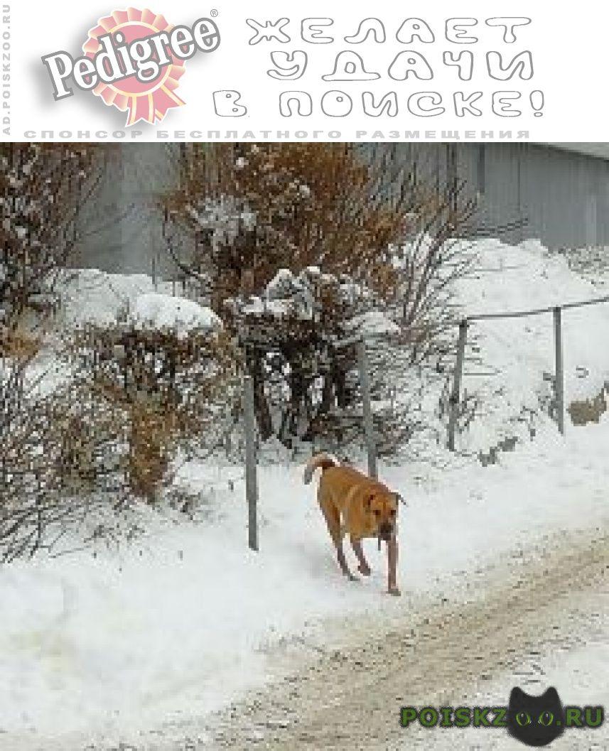 Найдена собака г.Саратов