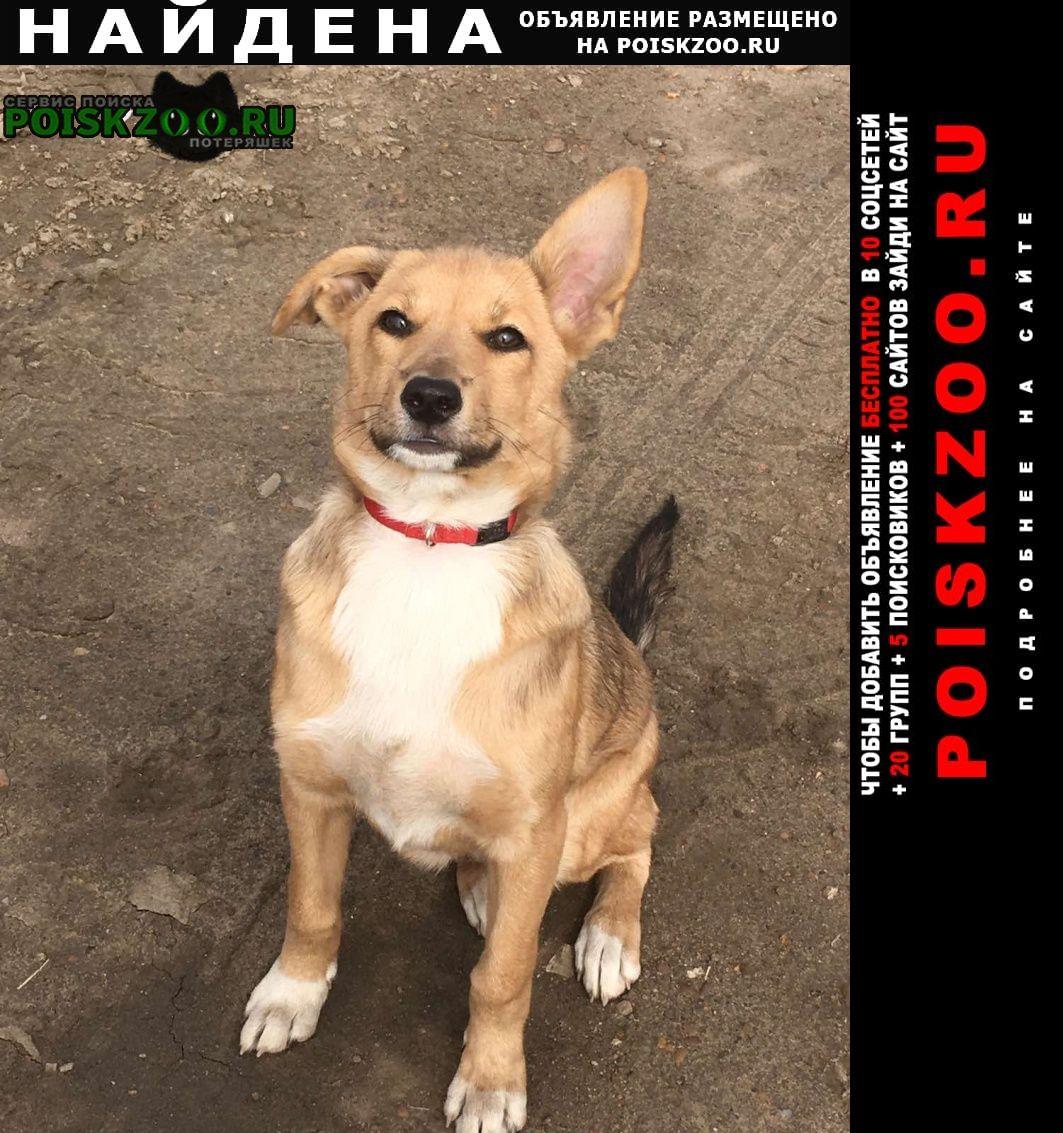 Найдена собака ошейник красный, щенок Иркутск