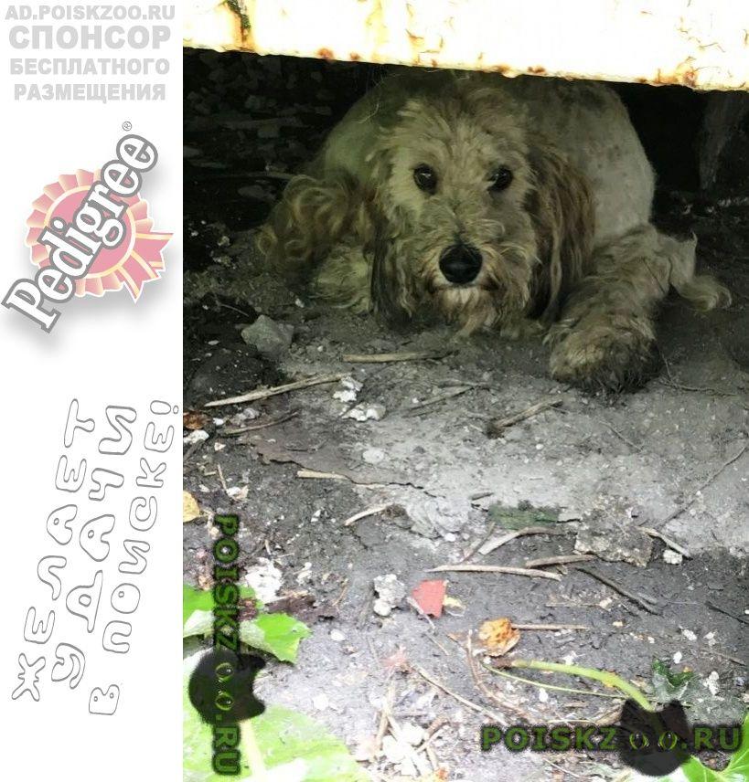 Найдена собака кобель г.Среднеуральск