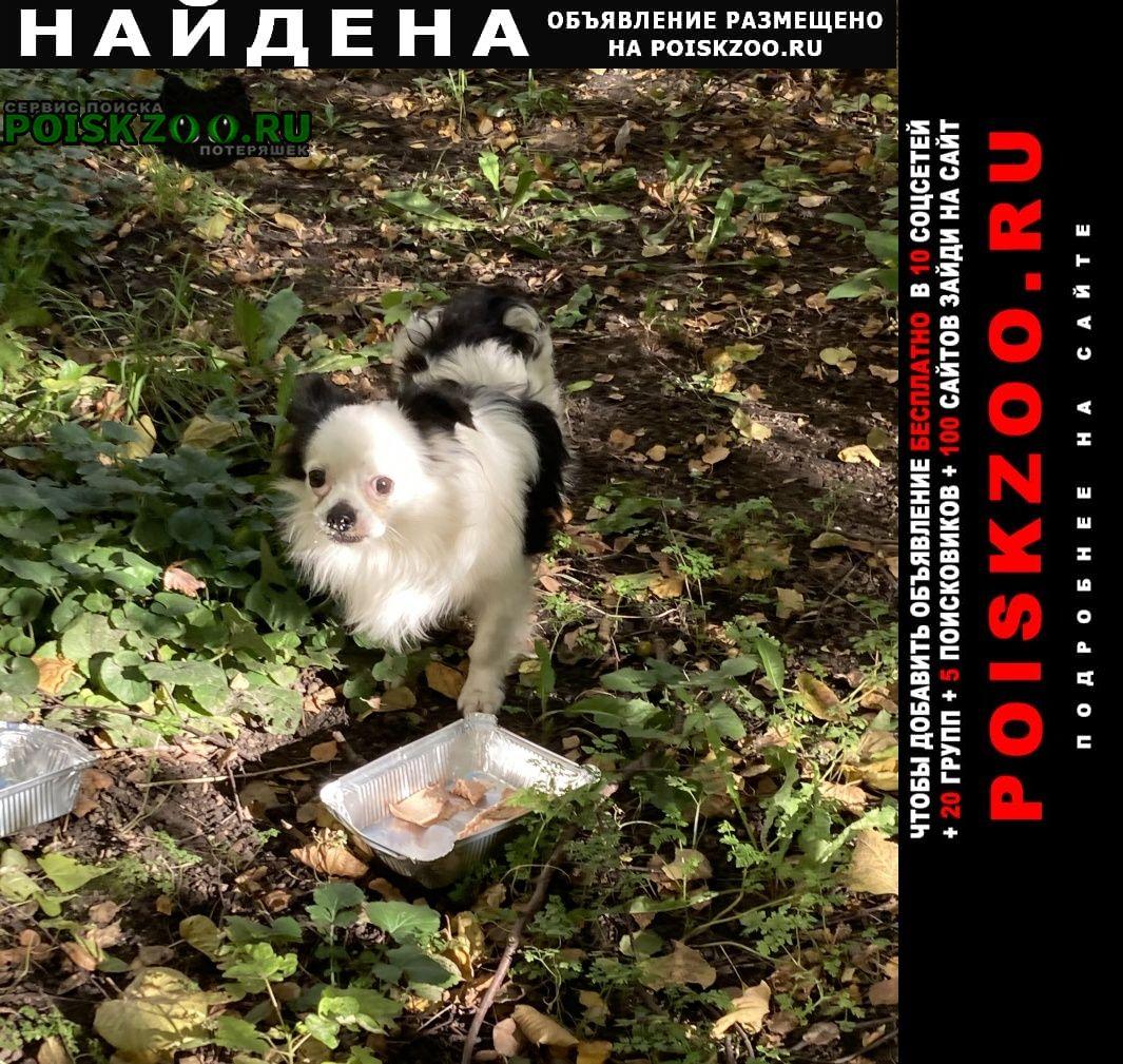Найдена собака замечена маленькая Москва
