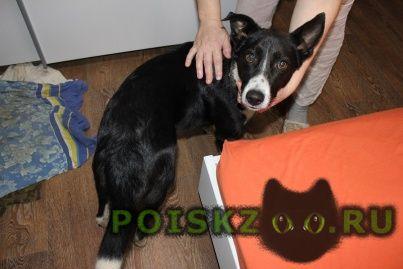 Найдена собака кобель в новознаменском г.Краснодар