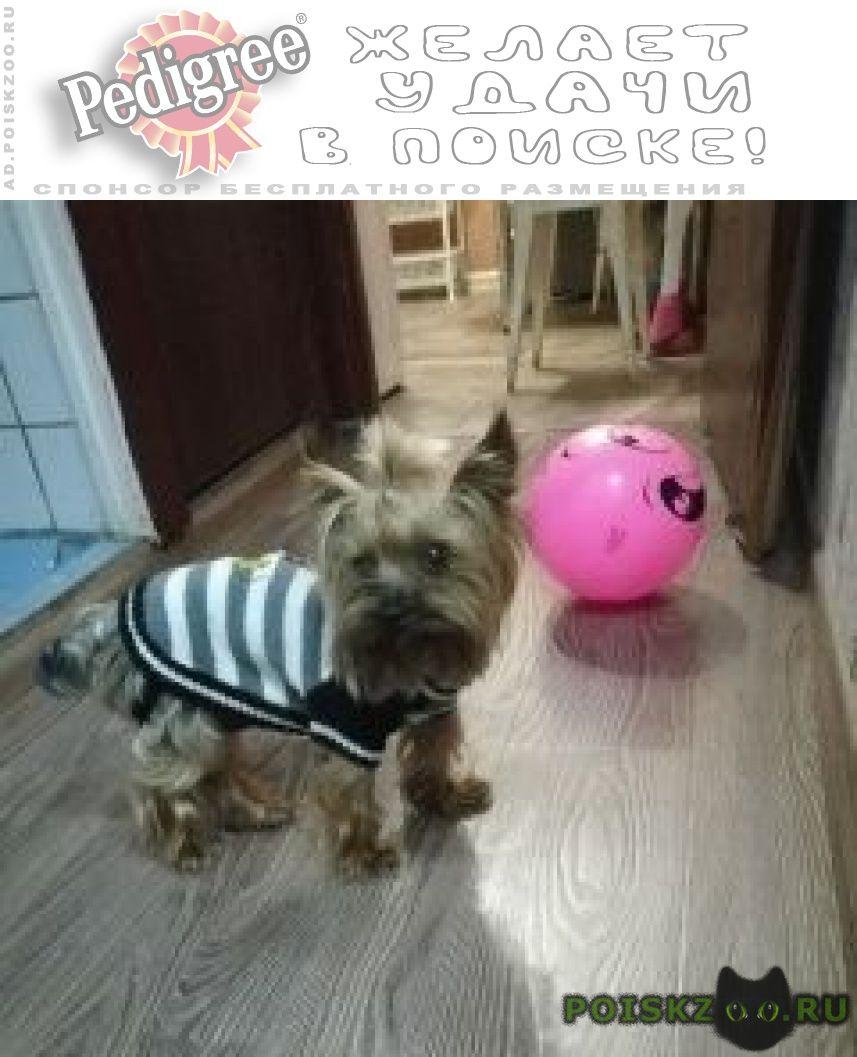 Найдена собака кобель мальчик йорка г.Москва
