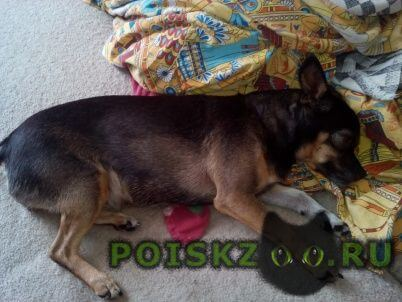 Найдена собака г.Новокузнецк