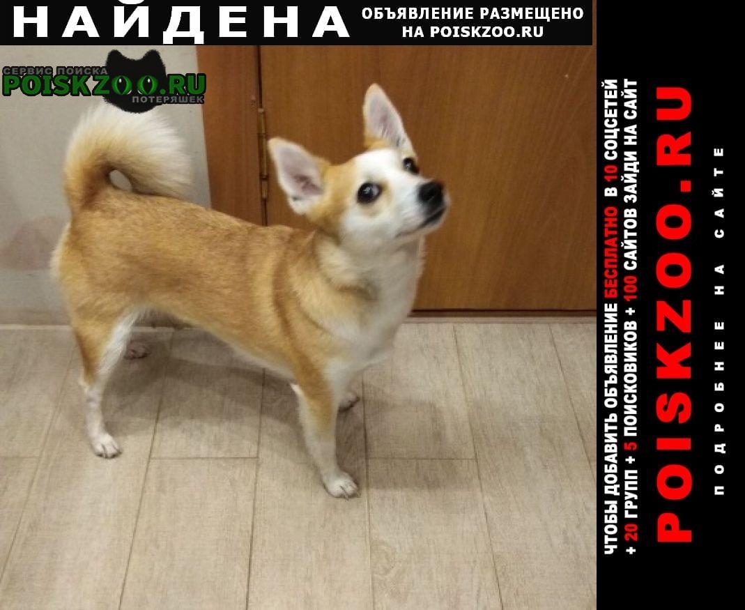 Найдена собака маленькая рыжая ухоженная Екатеринбург