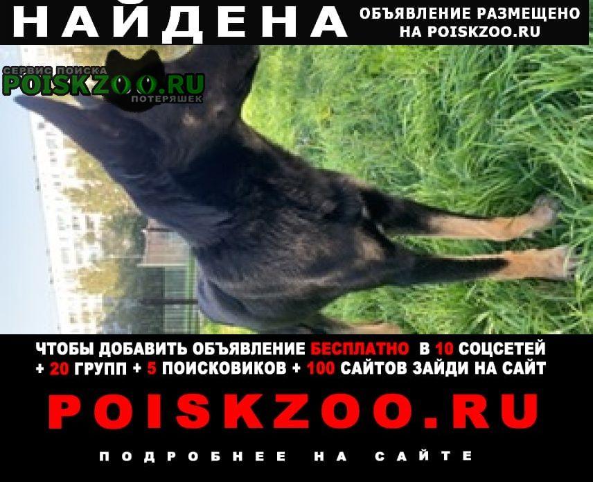 Санкт-Петербург Найдена собака хозяин найдись