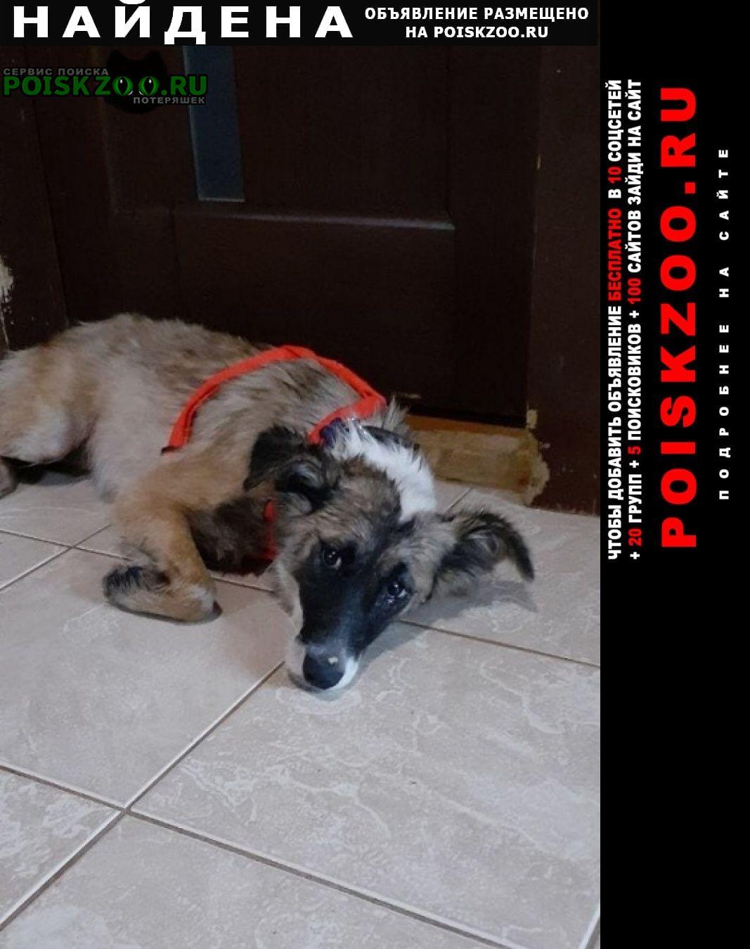Найдена собака на съезде с новорижского шоссе Москва