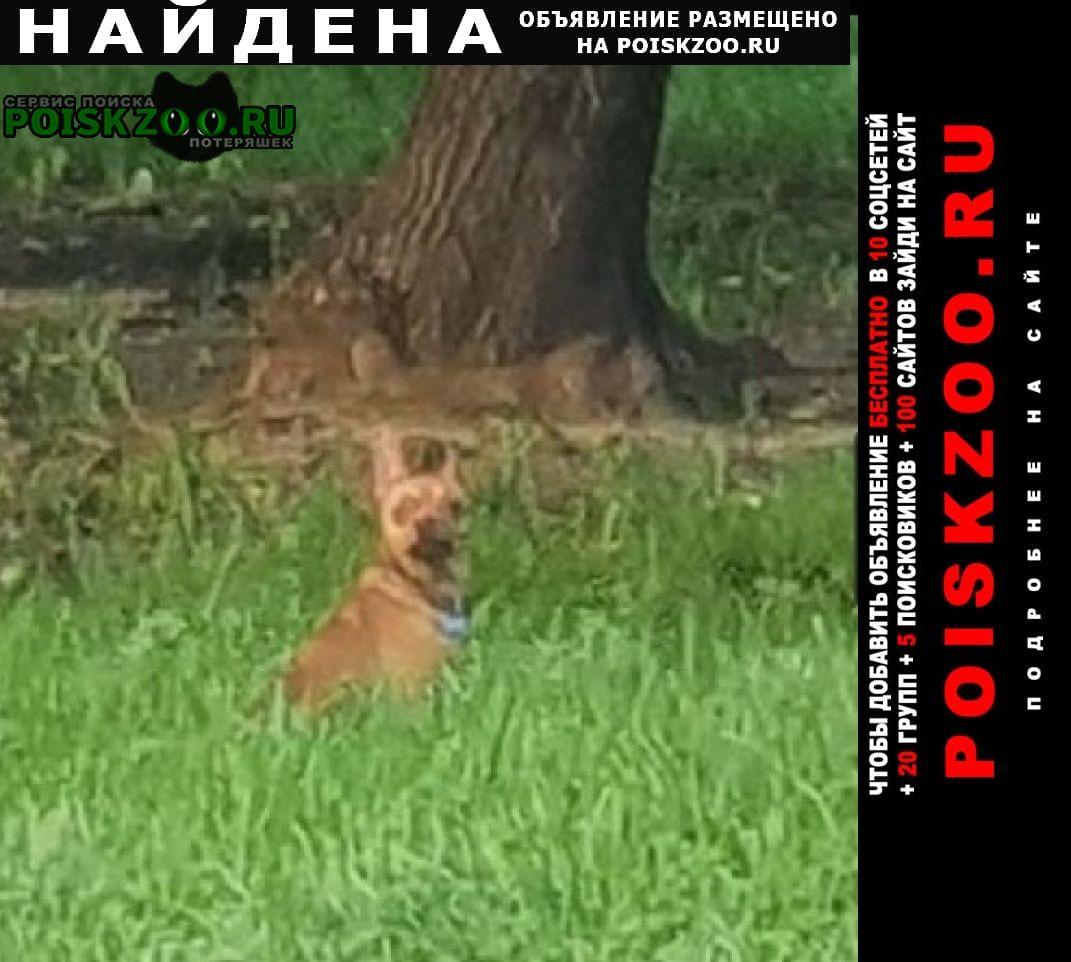 Найдена собака м.отрадное кабель чихуахуа Москва