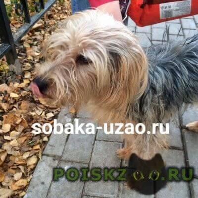 Найдена собака кобель бутово г.Щербинка