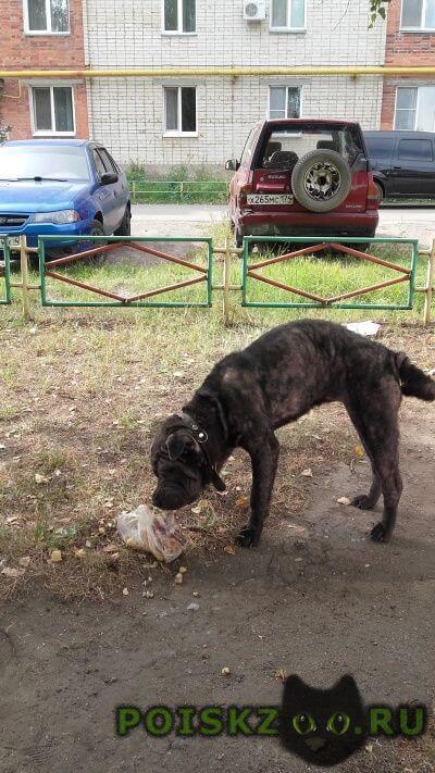 Найдена собака г.Копейск