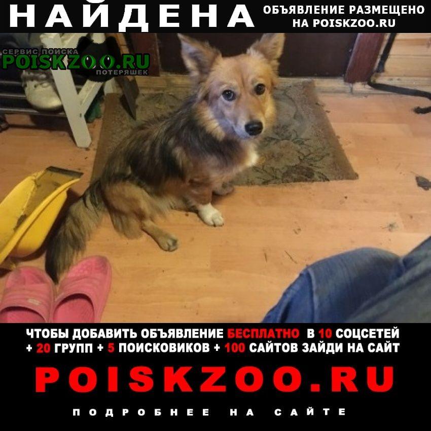 Пироговский Найдена собака в пирогово. девочка