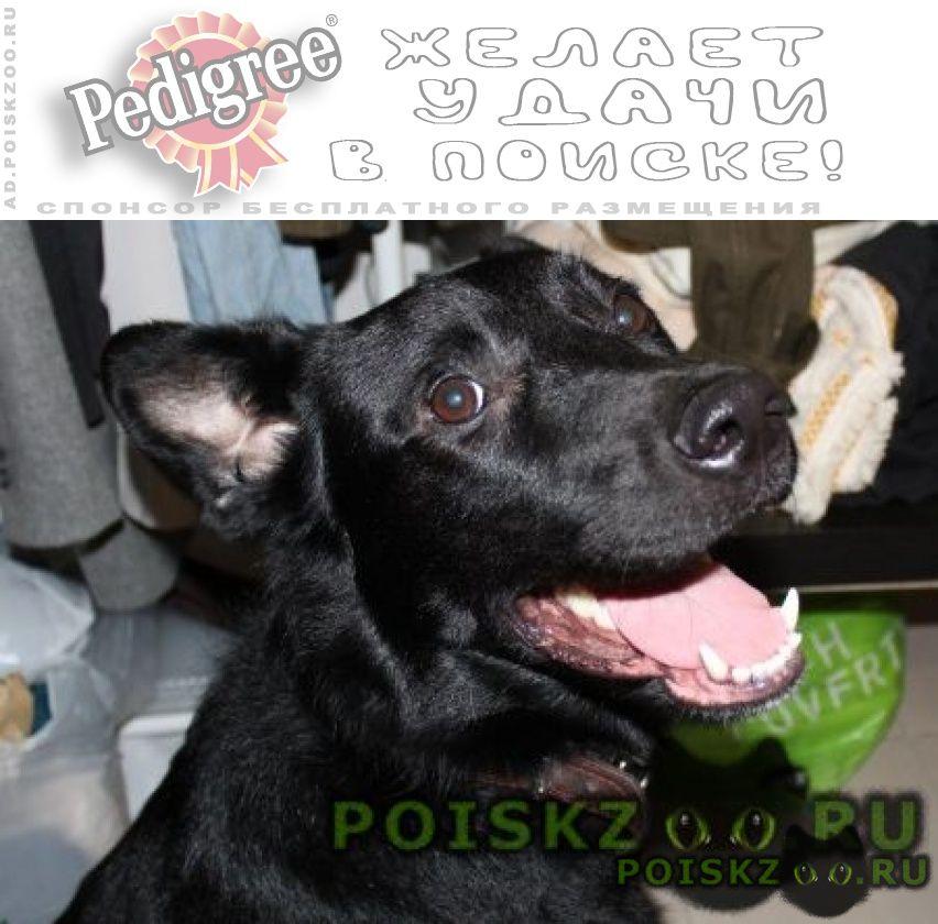 Найдена собака кобель черный кабель у метро царицыно г.Москва