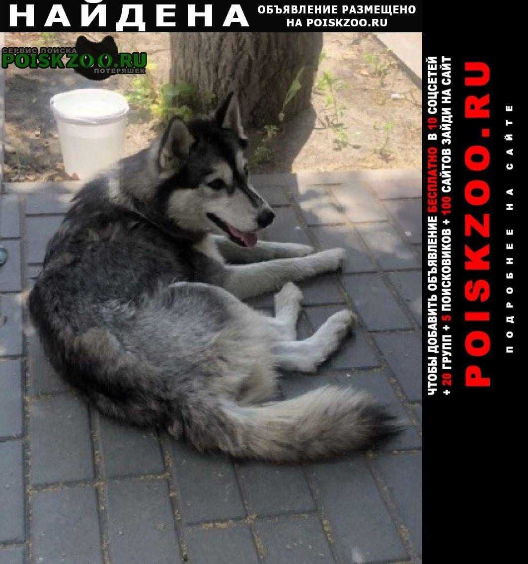 Найдена собака хаски Пенза