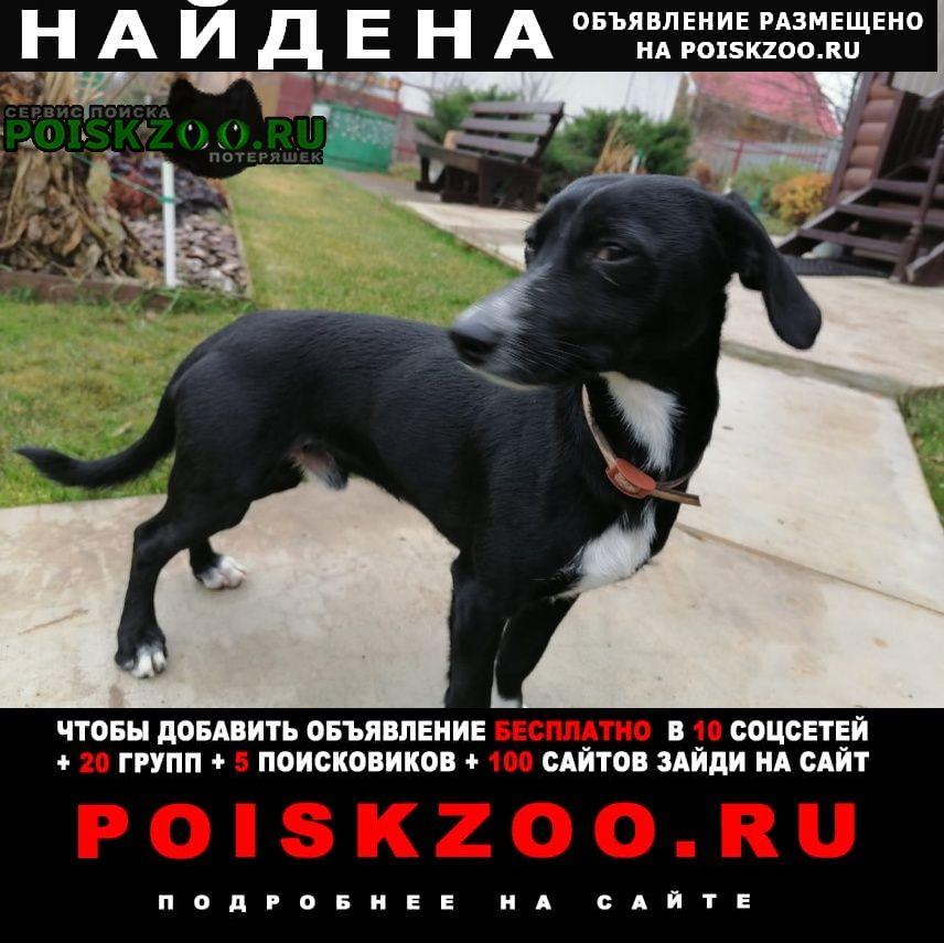 Найдена собака Уфа