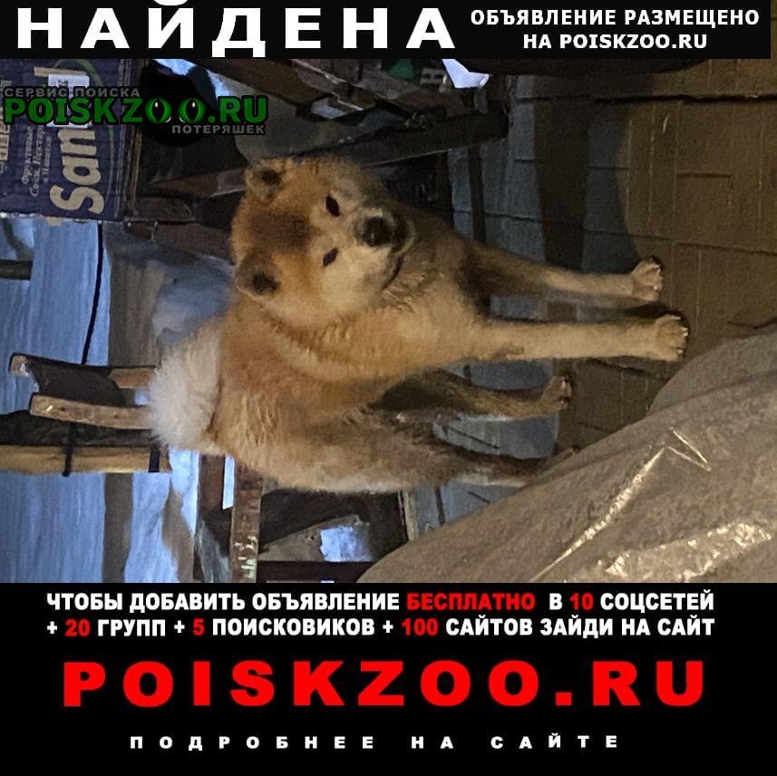 Найдена собака. Чехов