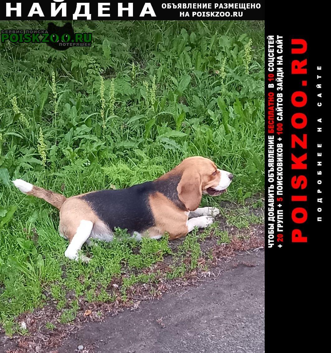 Найдена собака на шмидта Мурманск