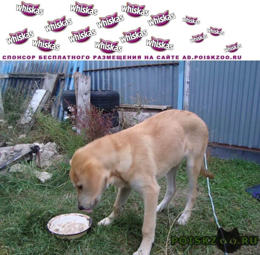 Найдена собака кобель г.Семилуки