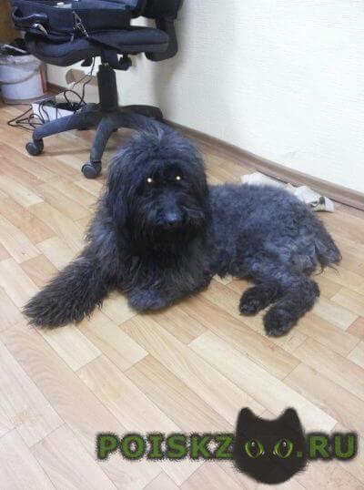 Найдена собака кобель г.Нефтеюганск