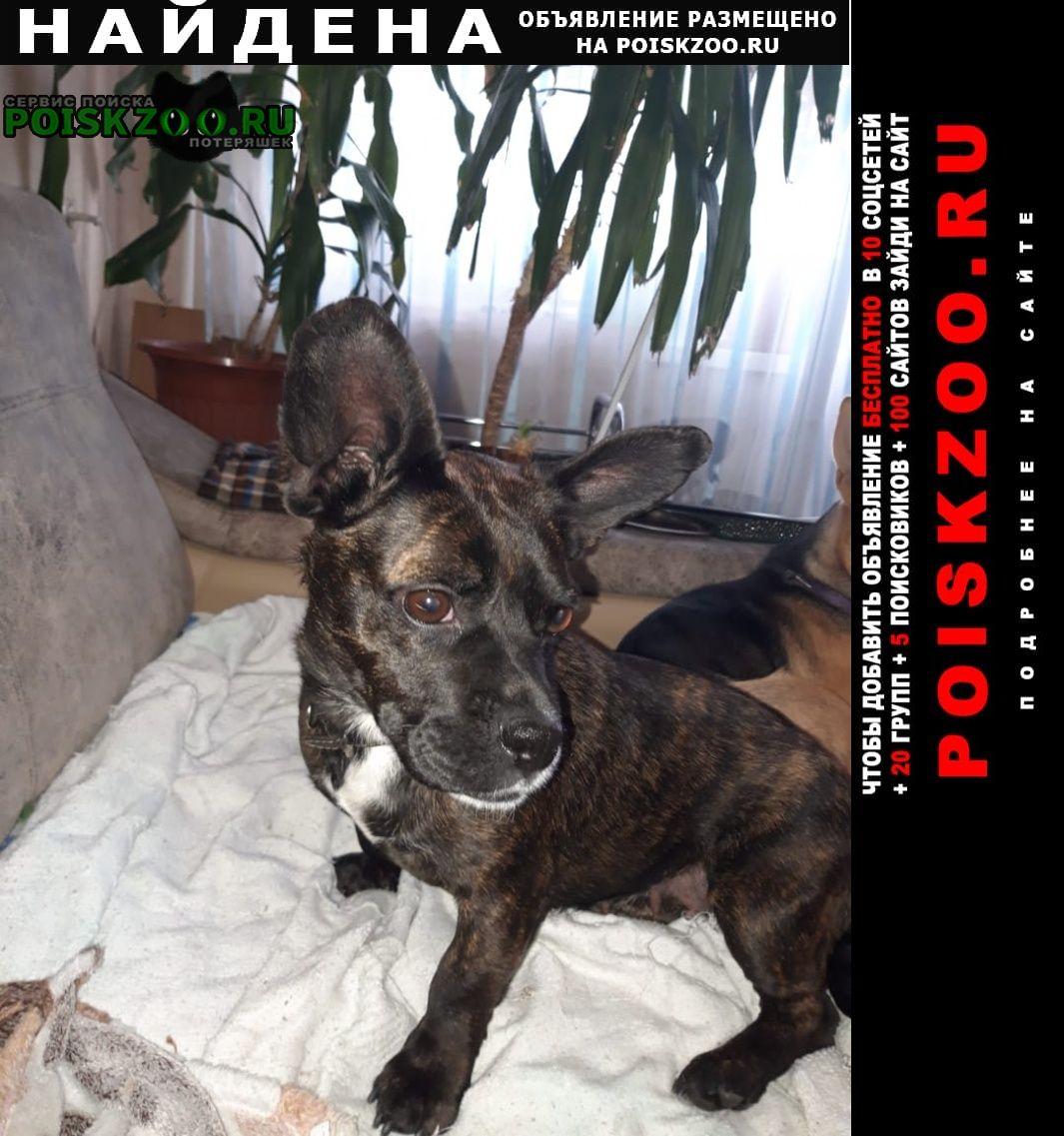 Найдена собака девочка Новокузнецк