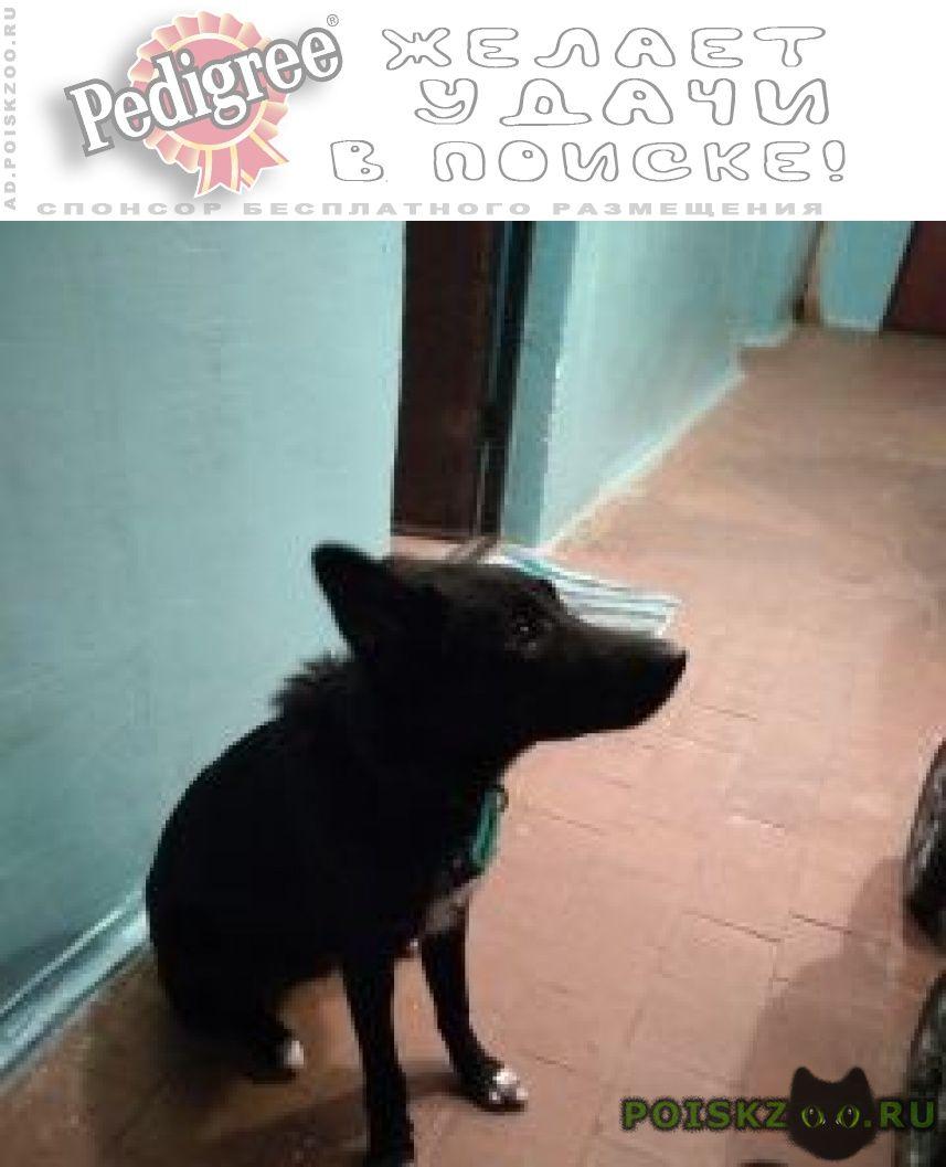 Найдена собака г.Красногорск