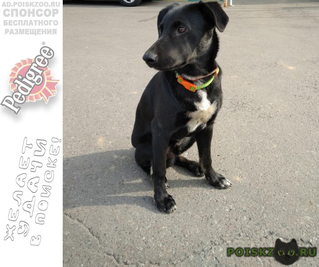 Найдена собака кобель. р. люблино г.Москва