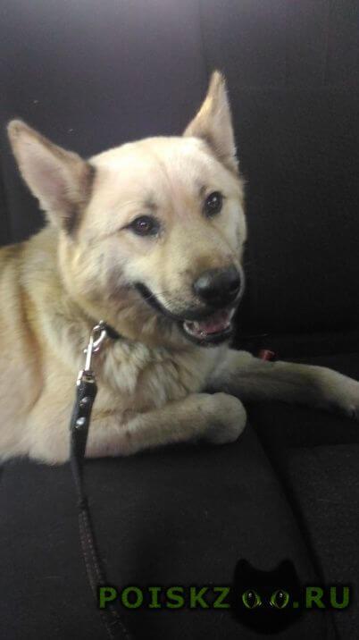 Найдена собака кобель ищем прежнего хозяина г.Нижний Новгород
