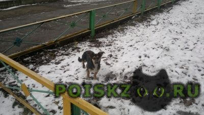 Найдена собака запсиб г.Новокузнецк