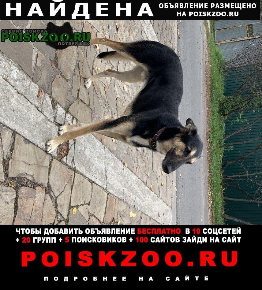 Найдена собака кабель Москва